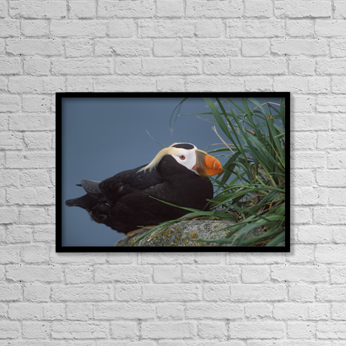 "Printscapes Wall Art: 18"" x 12"" Canvas Print With Black Frame - Animals by Milo Burcham"
