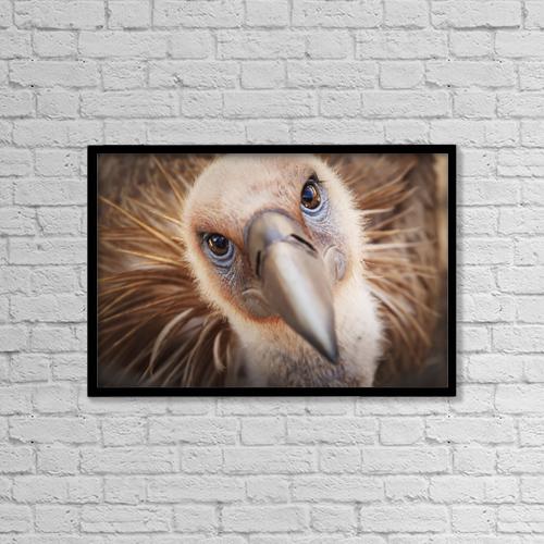 "Printscapes Wall Art: 18"" x 12"" Canvas Print With Black Frame - Griffon vulture (gyps fulvus);Israel by Reynold Mainse"