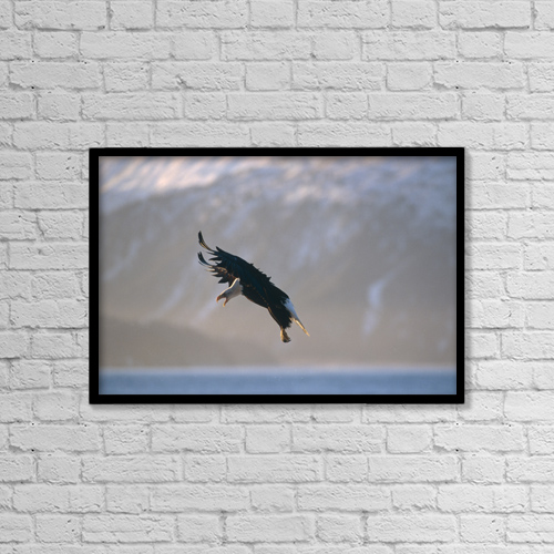 "Printscapes Wall Art: 18"" x 12"" Canvas Print With Black Frame - Bald Eagle Landing Kenai Peninsula Ak by Gary Schultz"