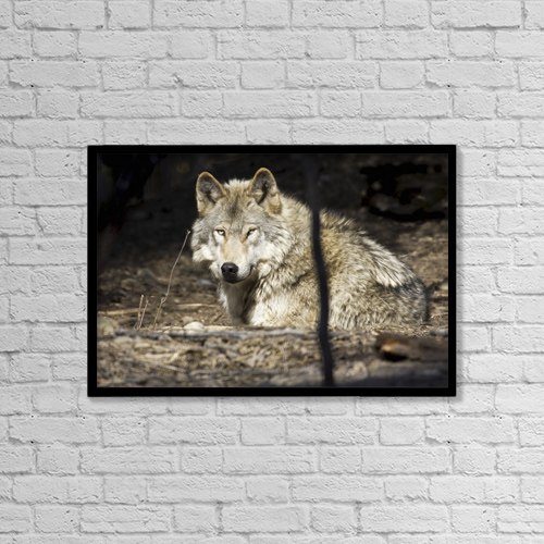 "Printscapes Wall Art: 18"" x 12"" Canvas Print With Black Frame - Animals by Mike Criss"