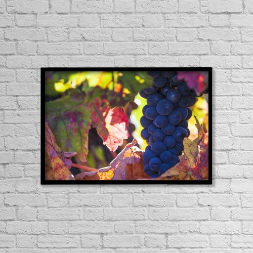 "Printscapes Wall Art: 18"" x 12"" Canvas Print With Black Frame - Spain, Ripe red grape in vineyard by Carlos Sanchez Pereyra"