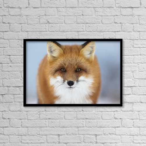 "Printscapes Wall Art: 18"" x 12"" Canvas Print With Black Frame - Red Fox Staring At The Camera by Robert Postma"