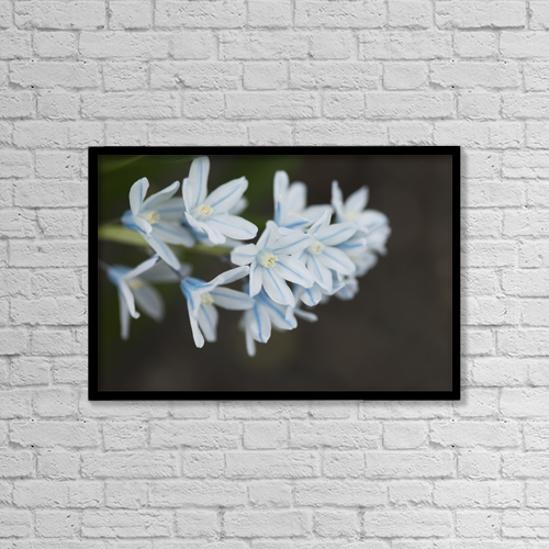 "Printscapes Wall Art: 18"" x 12"" Canvas Print With Black Frame - Close up of white flowers by Keith Levit"