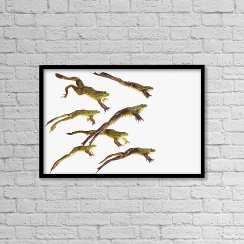 "Printscapes Wall Art: 18"" x 12"" Canvas Print With Black Frame - Leaping frogs by Thomas Kitchin & Victoria Hurst"
