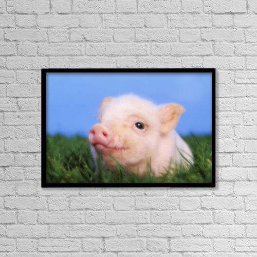 "Printscapes Wall Art: 18"" x 12"" Canvas Print With Black Frame - Baby pig lying on grass by Thomas Kitchin & Victoria Hurst"