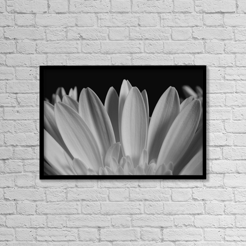 "Printscapes Wall Art: 18"" x 12"" Canvas Print With Black Frame - Close Up Of Flower Petals by David Chapman"