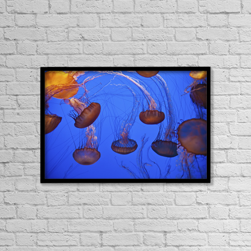 """Printscapes Wall Art: 18"""" x 12"""" Canvas Print With Black Frame - Jellyfish In Aquarium; California, Usa by Paul Quayle"""