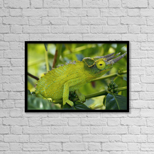"Printscapes Wall Art: 18"" x 12"" Canvas Print With Black Frame - Animals by Philip Rosenberg"