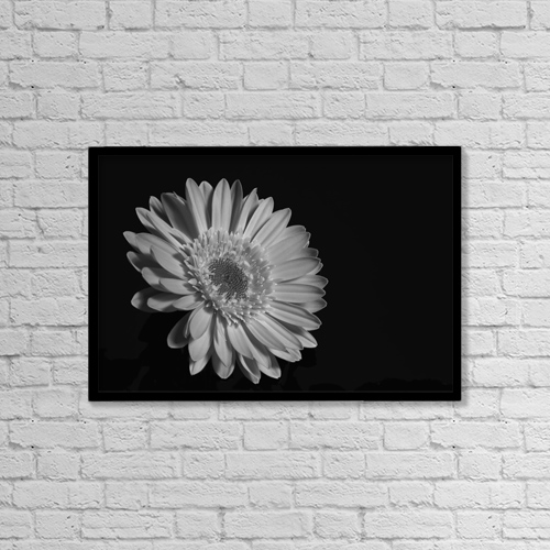 "Printscapes Wall Art: 18"" x 12"" Canvas Print With Black Frame - Gerbera Daisy; Waterloo, Quebec, Canada by David Chapman"