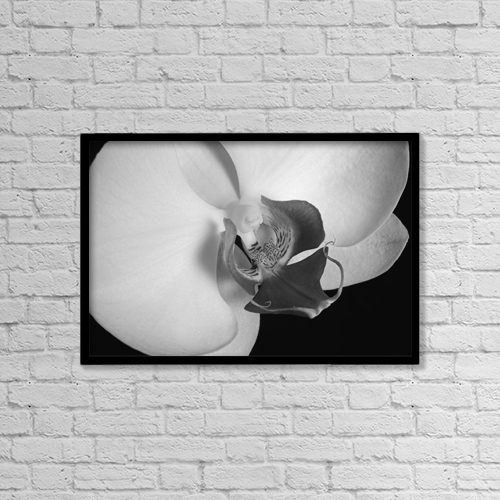 "Printscapes Wall Art: 18"" x 12"" Canvas Print With Black Frame - Close Up Of An Orchid by David Chapman"
