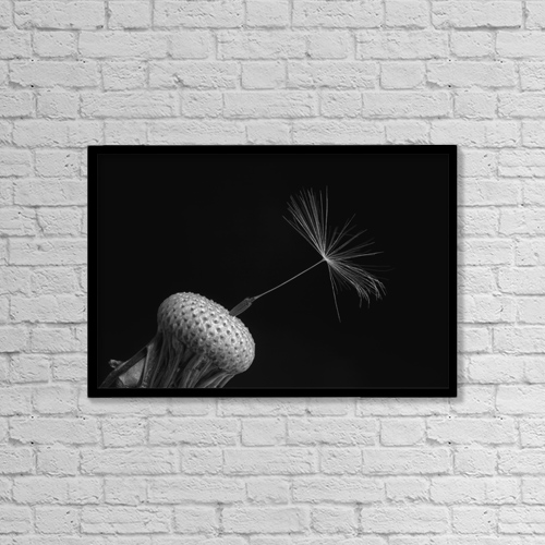 "Printscapes Wall Art: 18"" x 12"" Canvas Print With Black Frame - Dandelion Seed; Waterloo, Quebec, Canada by David Chapman"