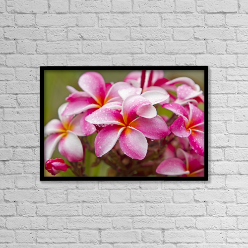"Printscapes Wall Art: 18"" x 12"" Canvas Print With Black Frame - Pink Plumerias Covered In Dew Drops by Ron Dahlquist"