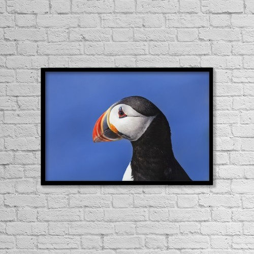 "Printscapes Wall Art: 18"" x 12"" Canvas Print With Black Frame - Animals by Yves Marcoux"