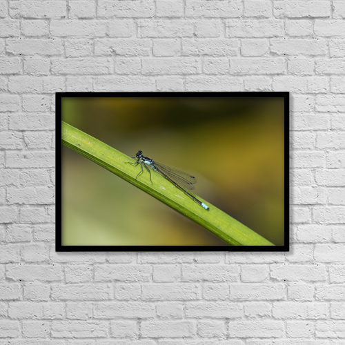"Printscapes Wall Art: 18"" x 12"" Canvas Print With Black Frame - A Damselfly Rests On A Stem by Robert L. Potts"