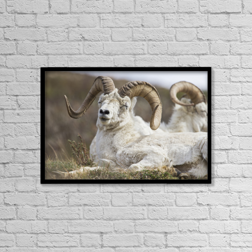 """Printscapes Wall Art: 18"""" x 12"""" Canvas Print With Black Frame - Animals by Kip Evans"""
