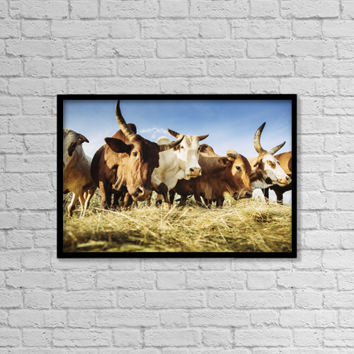 """Printscapes Wall Art: 18"""" x 12"""" Canvas Print With Black Frame - Herded Cattle In The Western Highlands by Toby Adamson"""
