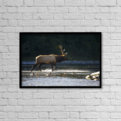"Printscapes Wall Art: 18"" x 12"" Canvas Print With Black Frame - Animals by John Mahan"