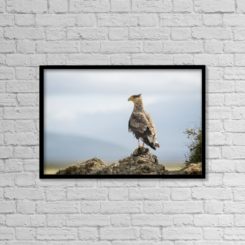"Printscapes Wall Art: 18"" x 12"" Canvas Print With Black Frame - A Bird Perched On A Rock by Remsberg Inc"
