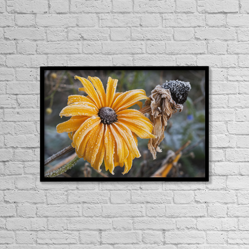 "Printscapes Wall Art: 18"" x 12"" Canvas Print With Black Frame - Frost Covers The Flowers by Robert L. Potts"