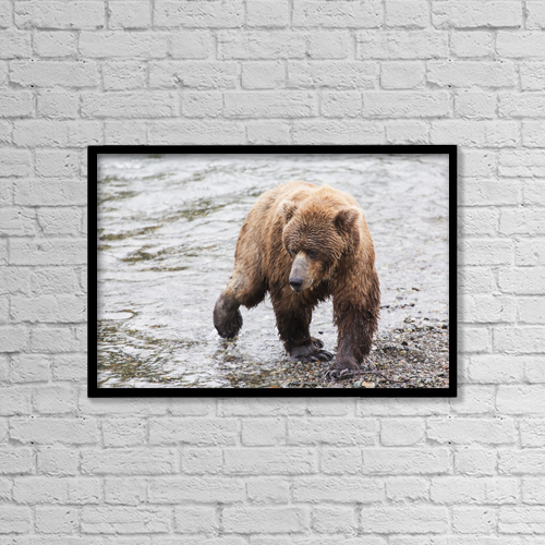 "Printscapes Wall Art: 18"" x 12"" Canvas Print With Black Frame - Animals by Lucas Payne"