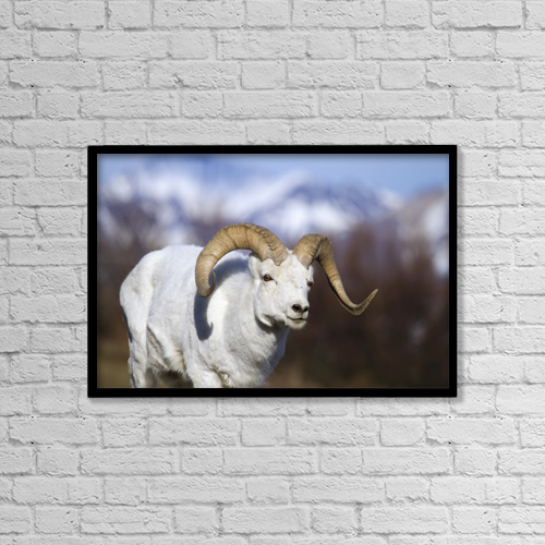 "Printscapes Wall Art: 18"" x 12"" Canvas Print With Black Frame - Animals by Guy Runco"
