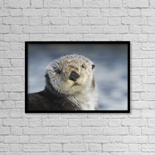 "Printscapes Wall Art: 18"" x 12"" Canvas Print With Black Frame - Sea Otter In Whittier, Alaska by Doug Lindstrand"