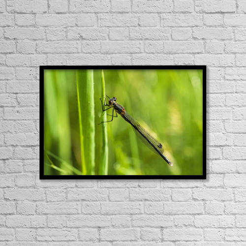 "Printscapes Wall Art: 18"" x 12"" Canvas Print With Black Frame - A Damselfly Rests On A Blade Of Grass by Robert L. Potts"