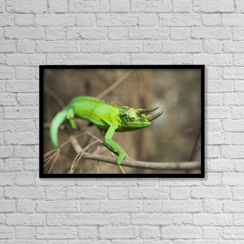 "Printscapes Wall Art: 18"" x 12"" Canvas Print With Black Frame - Animals by Charmian Vistaunet"