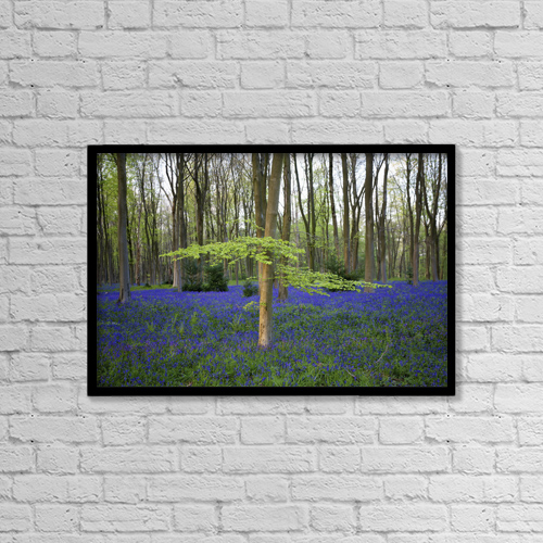 "Printscapes Wall Art: 18"" x 12"" Canvas Print With Black Frame - Bluebells In The Woods by Chris Caldicott"
