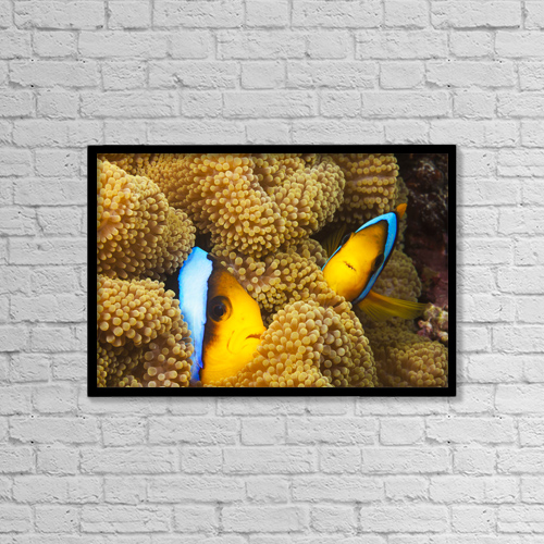 "Printscapes Wall Art: 18"" x 12"" Canvas Print With Black Frame - Marine Life by Dave Fleetham"
