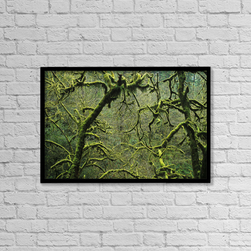"""Printscapes Wall Art: 18"""" x 12"""" Canvas Print With Black Frame - Mossy Trees Leafless In The Winter by Robert L. Potts"""