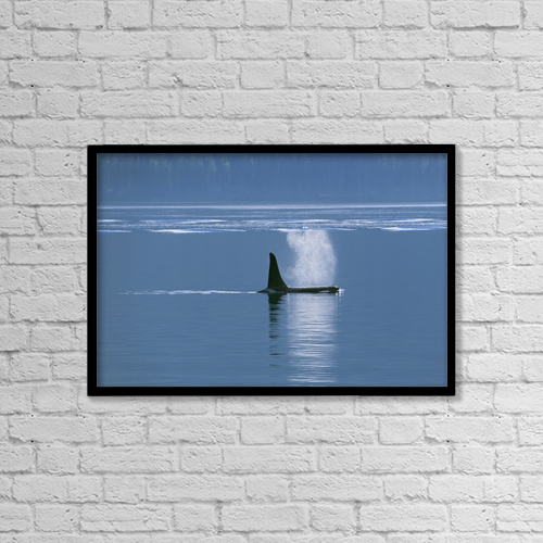 "Printscapes Wall Art: 18"" x 12"" Canvas Print With Black Frame - Orca (Orcinus Orca) Near Telegraph Cove by Carl Bruemmer"