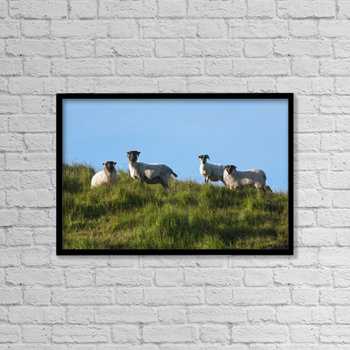 "Printscapes Wall Art: 18"" x 12"" Canvas Print With Black Frame - Sheep On Dingle Peninsula by Carl Bruemmer"