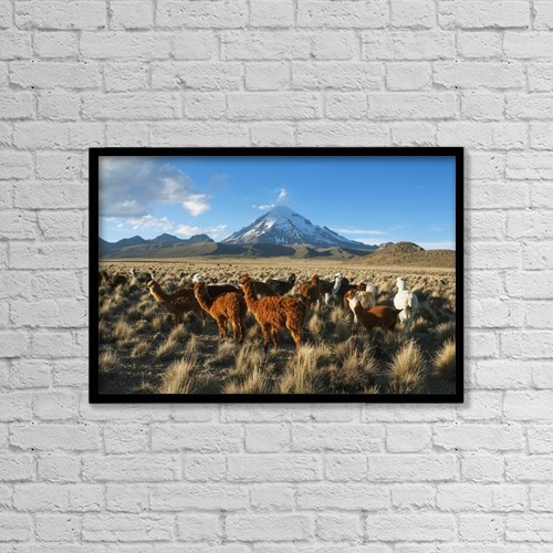 "Printscapes Wall Art: 18"" x 12"" Canvas Print With Black Frame - Animals by Carl Bruemmer"