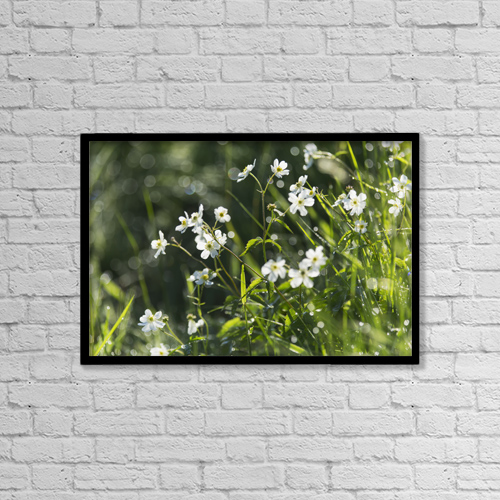 "Printscapes Wall Art: 18"" x 12"" Canvas Print With Black Frame - Buttercup (Ranunculus Platanifolius) by Carl Bruemmer"
