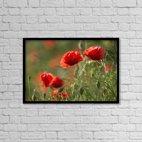 "Printscapes Wall Art: 18"" x 12"" Canvas Print With Black Frame - Red Poppy (Papaver Rhoeas) by Carl Bruemmer"