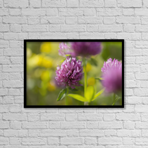 "Printscapes Wall Art: 18"" x 12"" Canvas Print With Black Frame - Red Clover (Trifolium Pratense) by Carl Bruemmer"