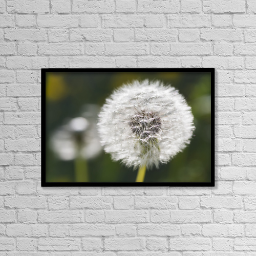 "Printscapes Wall Art: 18"" x 12"" Canvas Print With Black Frame - Dandelion (Taraxacum Officinale) by Carl Bruemmer"