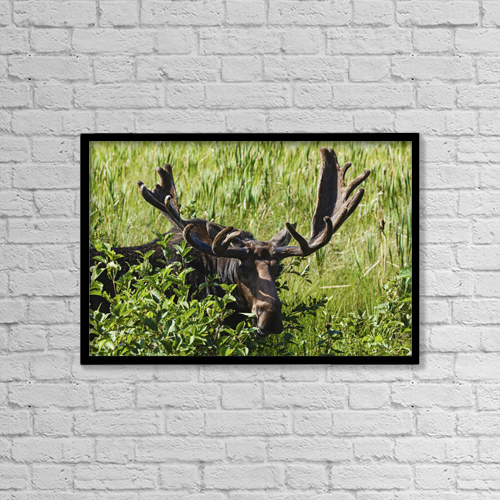 """Printscapes Wall Art: 18"""" x 12"""" Canvas Print With Black Frame - Animals by Carl Bruemmer"""