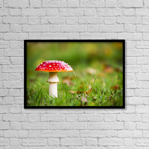 "Printscapes Wall Art: 18"" x 12"" Canvas Print With Black Frame - A Red Mushroom In The Grass by John Short"