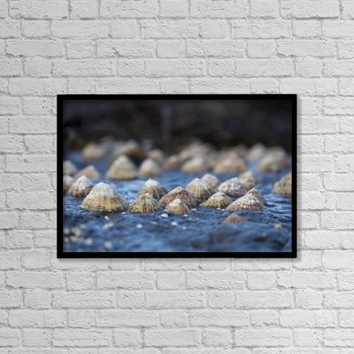 "Printscapes Wall Art: 18"" x 12"" Canvas Print With Black Frame - Seashells On A Rock by John Short"