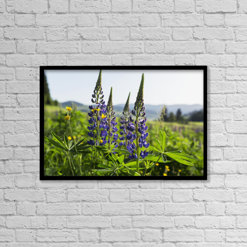 "Printscapes Wall Art: 18"" x 12"" Canvas Print With Black Frame - Bluebonnet Lupine (Lupinus Polyphyllus) by Carl Bruemmer"