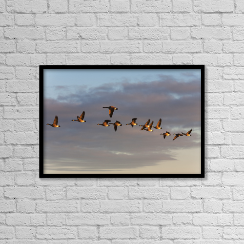 "Printscapes Wall Art: 18"" x 12"" Canvas Print With Black Frame - Canada Geese In Flight; Manitoba, Canada by Carl Bruemmer"