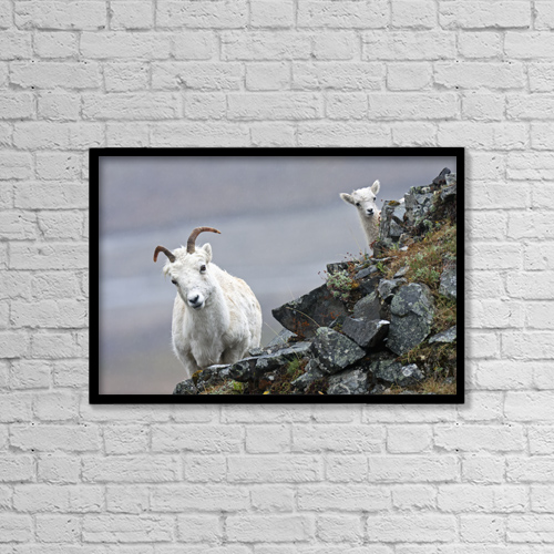 """Printscapes Wall Art: 18"""" x 12"""" Canvas Print With Black Frame - Animals by Alissa Crandall"""