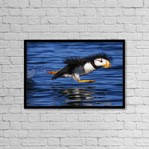 "Printscapes Wall Art: 18"" x 12"" Canvas Print With Black Frame - Animals by Marion Owen"