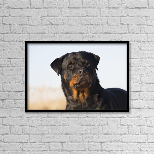 "Printscapes Wall Art: 18"" x 12"" Canvas Print With Black Frame - Portrait Of Rottweiler Dog On Winter Beach by Lynn Stone"