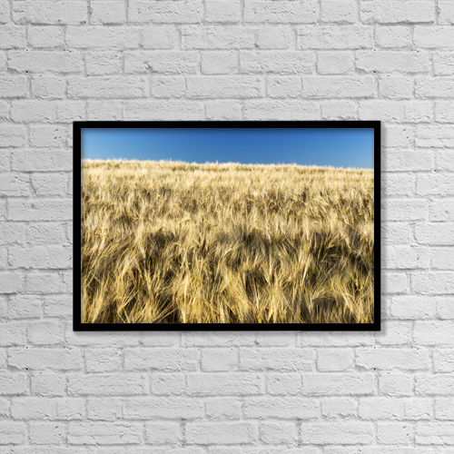 """Printscapes Wall Art: 18"""" x 12"""" Canvas Print With Black Frame - Golden Barley Field With Blue Sky by Michael Interisano"""