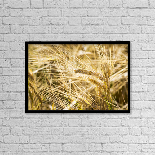 "Printscapes Wall Art: 18"" x 12"" Canvas Print With Black Frame - Close Up Of Golden Ripe Barley Heads by Michael Interisano"