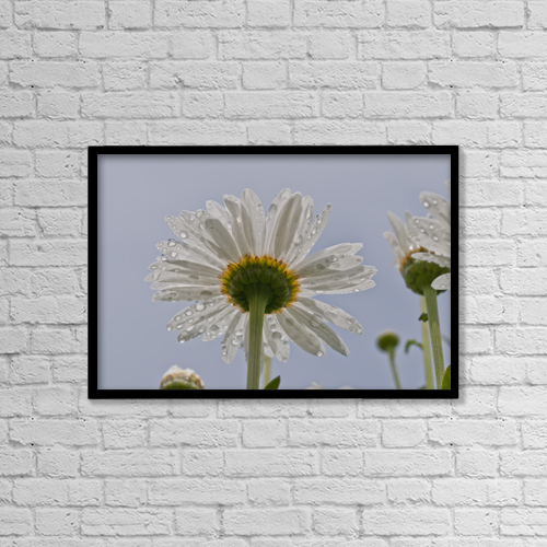 "Printscapes Wall Art: 18"" x 12"" Canvas Print With Black Frame - Raindrops Cling To Daisy Petals by Robert L. Potts"