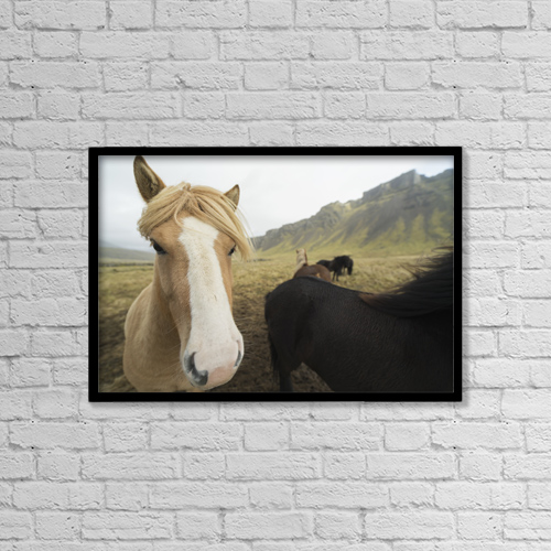 "Printscapes Wall Art: 18"" x 12"" Canvas Print With Black Frame - Icelandic Horses; Iceland by Robert Postma"